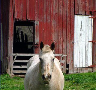 HorseRedBarn