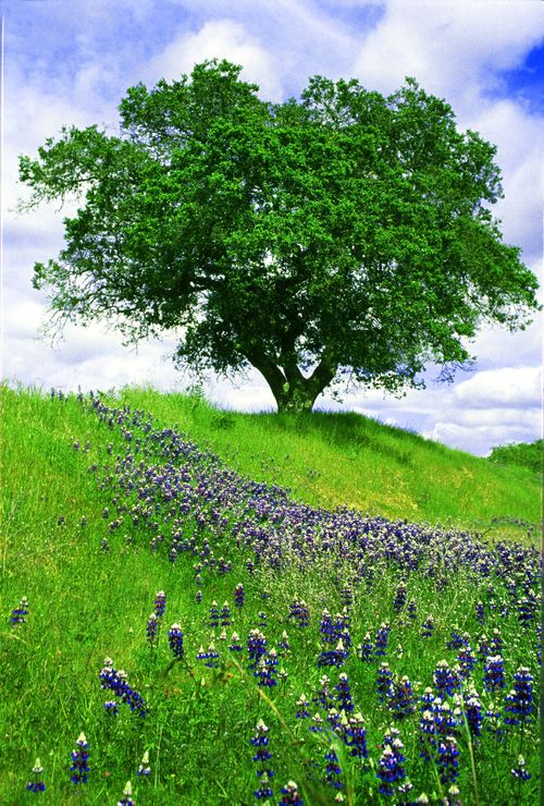 Treeonhill