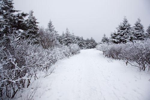 SnowyWinterWoodsGeoffreyWhiteway |