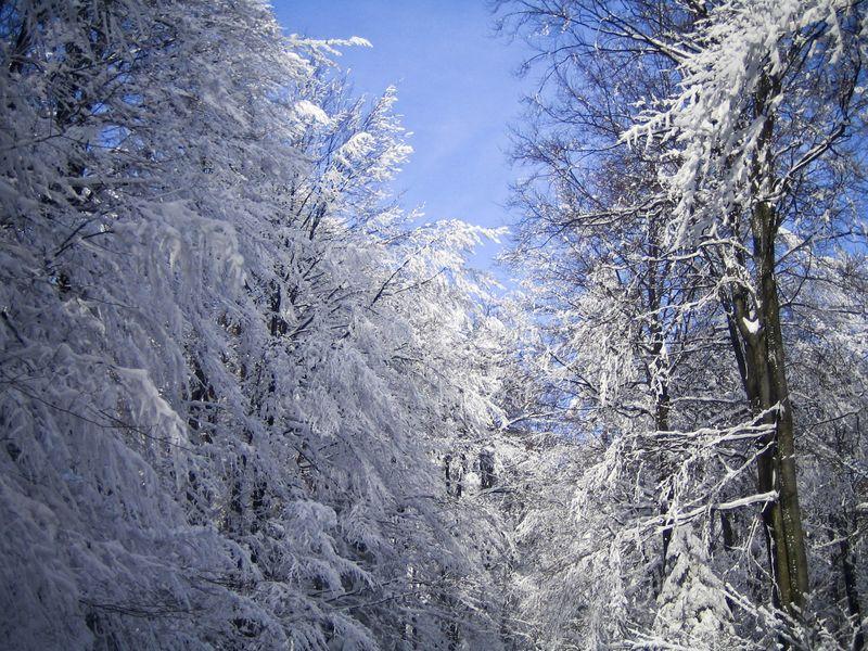 SnowyWoodsFreerange
