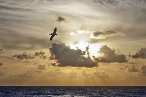 Bird_GeoffreyWhiteway