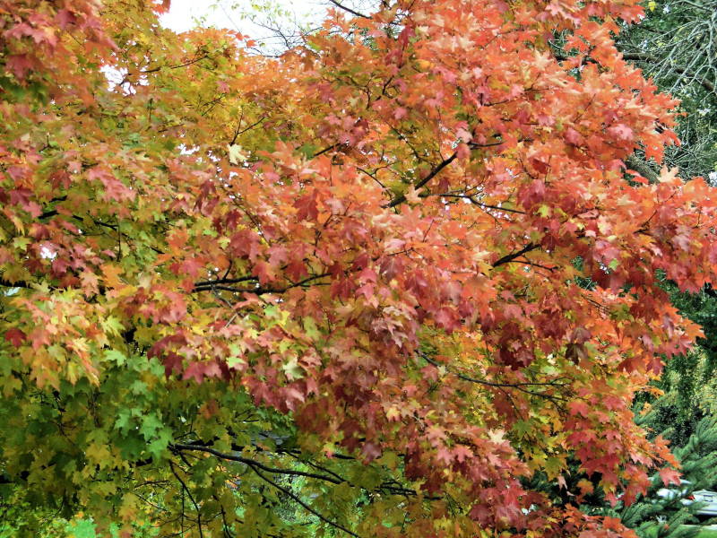 Fall-leaves-joy-zaehringer_6855_20080816