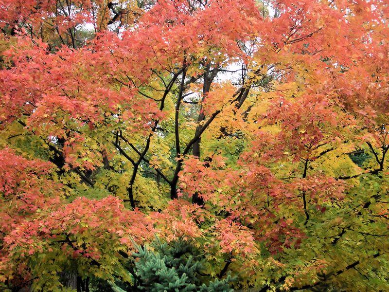 Fall_Leaves_Joy_Zaehringer