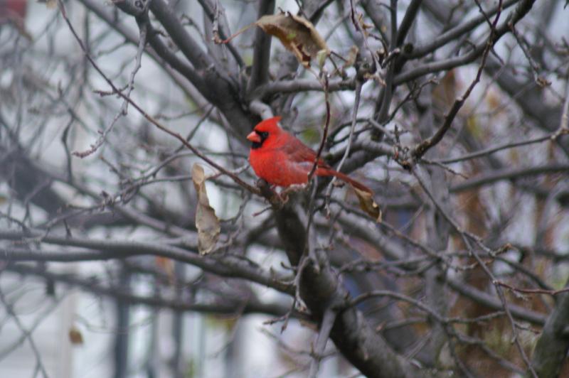 CardinalGeraldRencehausen