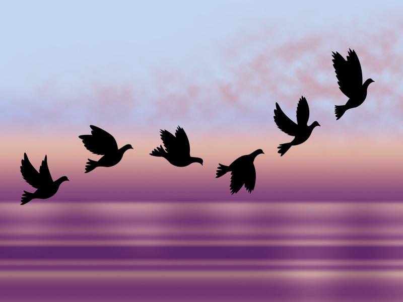 StuartMiles_flock_illustration