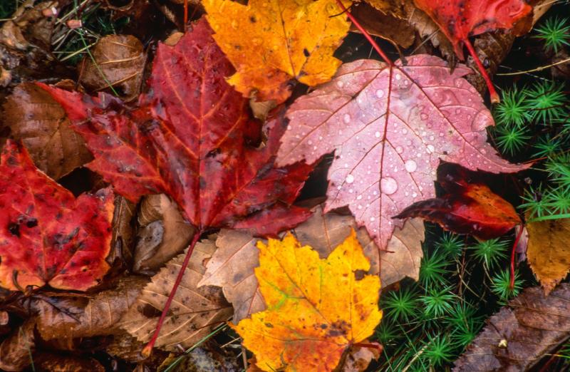 Fall Leaves Freerange photo_74182_20160803