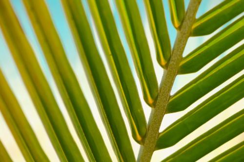 Ed Gregor-Stokpic Palm