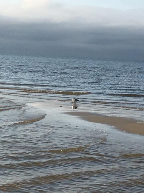 M seagull